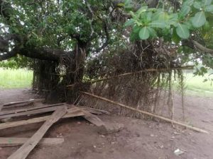One of the classrooms under the tree