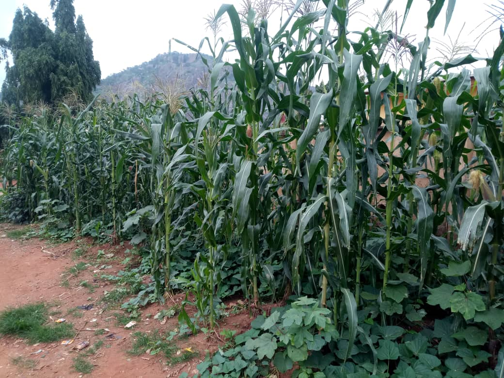 Special Report How Farmers Lost Farmlands, Produce to Herders Crisis