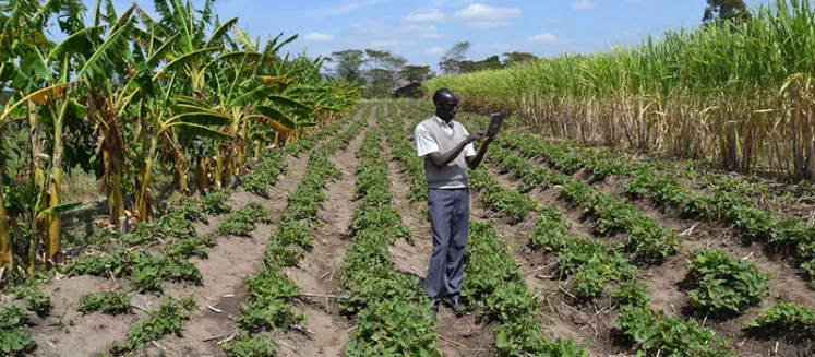 How rural community youth are boosting Agriculture using ICT-technology